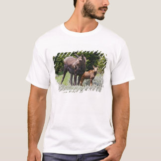USA, Wyoming, Bighorn Mountains, moose Alces T-Shirt