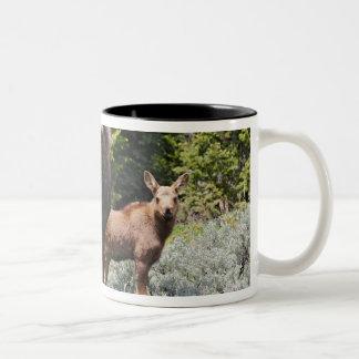 USA, Wyoming, Bighorn Mountains, moose Alces Two-Tone Coffee Mug