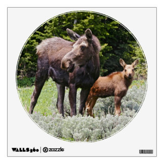USA, Wyoming, Bighorn Mountains, moose Alces Wall Decal