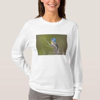 USA, Wyoming, Bighorn National Recreation 2 T-Shirt