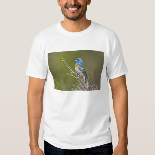 USA, Wyoming, Bighorn National Recreation 2 Tshirt