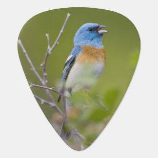 USA, Wyoming, Bighorn National Recreation Guitar Pick