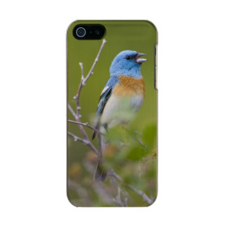 USA, Wyoming, Bighorn National Recreation Metallic Phone Case For iPhone SE/5/5s