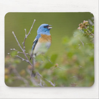 USA, Wyoming, Bighorn National Recreation Mouse Pad