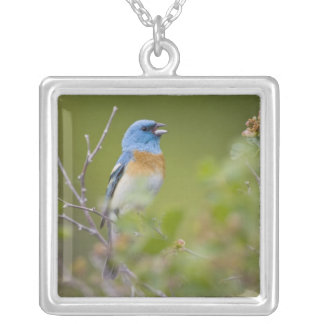 USA, Wyoming, Bighorn National Recreation Silver Plated Necklace