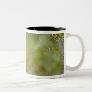 USA, Wyoming, Bighorn National Recreation Two-Tone Coffee Mug