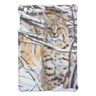 USA, Wyoming, Bobcat sitting in snow-covered Case For The iPad Mini