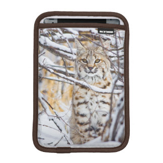 USA, Wyoming, Bobcat sitting in snow-covered iPad Mini Sleeve