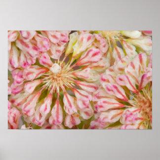 USA, Wyoming, Buckwheat wildflower close-up Poster
