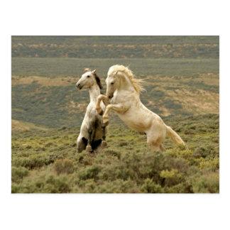 USA, Wyoming, Carbon County. Two wild Postcard