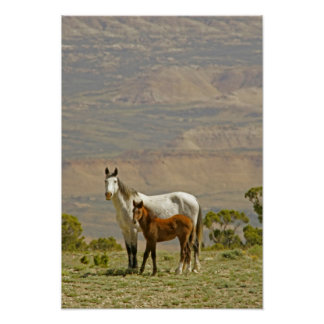 USA, Wyoming, Carbon County. Wild horse mare Poster