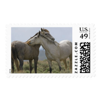 USA, Wyoming, Carbon County. Wild horses 2 Postage Stamp