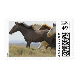 USA, Wyoming, Carbon County. Wild horses Stamp