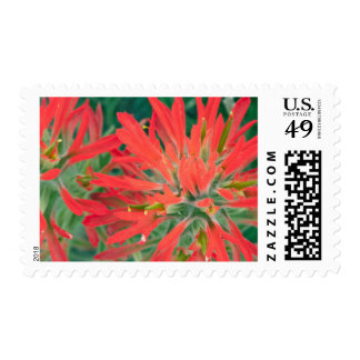 USA, Wyoming, Close-up of Desert Paintbrush Postage Stamp
