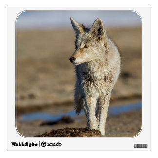 USA, Wyoming, Coyote walking on beach Wall Sticker
