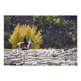 USA, Wyoming, Evanston. Cowboy herding sheep. Photo Art