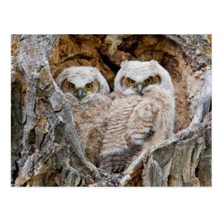 USA, Wyoming, Grand Teton National Park 2 Postcard