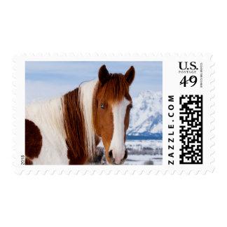 USA, Wyoming, Grand Teton National Park 3 Postage