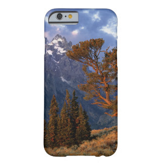 USA, Wyoming, Grand Teton NP. A lone cedar Barely There iPhone 6 Case