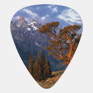 USA, Wyoming, Grand Teton NP. A lone cedar Guitar Pick