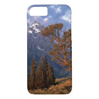 USA, Wyoming, Grand Teton NP. A lone cedar iPhone 7 Case