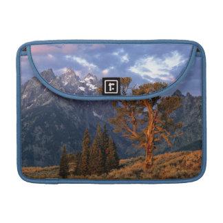 USA, Wyoming, Grand Teton NP. A lone cedar Sleeve For MacBooks