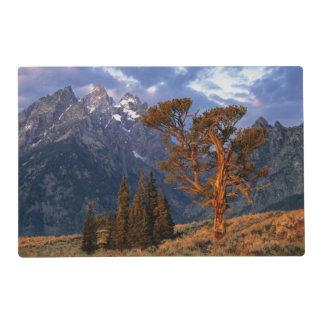 USA, Wyoming, Grand Teton NP. A lone cedar Placemat