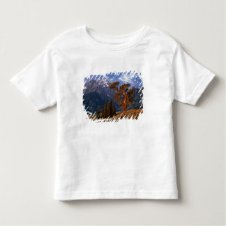 USA, Wyoming, Grand Teton NP. A lone cedar Toddler T-shirt