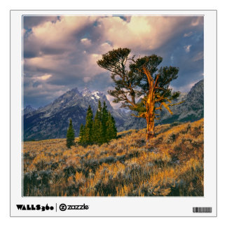 USA, Wyoming, Grand Teton NP. Sunrise greets a Wall Decal
