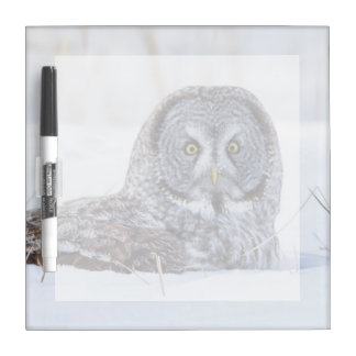 USA, Wyoming, Great Gray Owl sitting in snow Dry-Erase Board