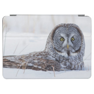 USA, Wyoming, Great Gray Owl sitting in snow iPad Air Cover