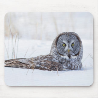 USA, Wyoming, Great Gray Owl sitting in snow Mouse Pad