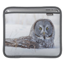 USA, Wyoming, Great Gray Owl sitting in snow Sleeve For iPads