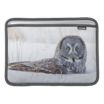 USA, Wyoming, Great Gray Owl sitting in snow Sleeve For MacBook Air