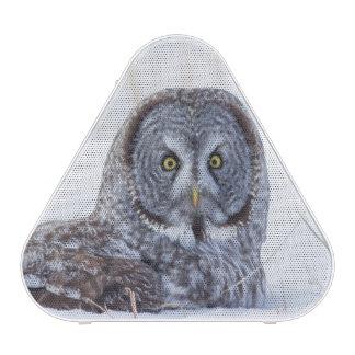 USA, Wyoming, Great Gray Owl sitting in snow Speaker