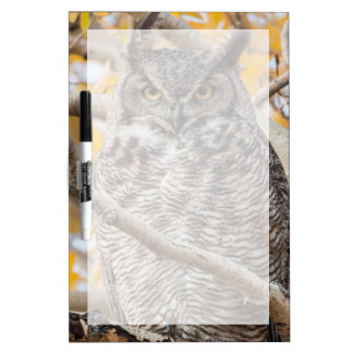 USA, Wyoming, Great Horned Owl roosting Dry Erase Board