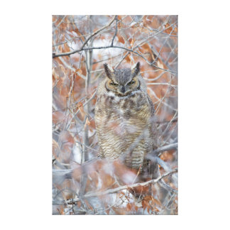 USA, Wyoming, Great Horned Owl roosting in fall Canvas Print