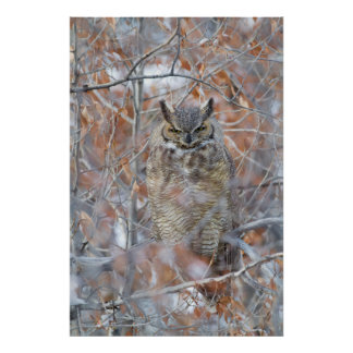 USA, Wyoming, Great Horned Owl roosting in fall Poster