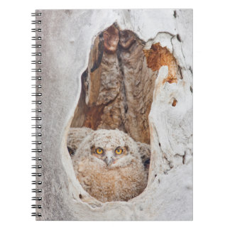 USA, Wyoming, Lincoln County, Great Horned Notebook
