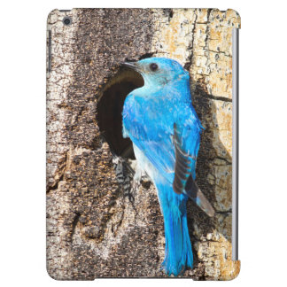 USA, Wyoming, Male Mountain Bluebird Cover For iPad Air
