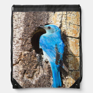 USA, Wyoming, Male Mountain Bluebird Drawstring Backpack