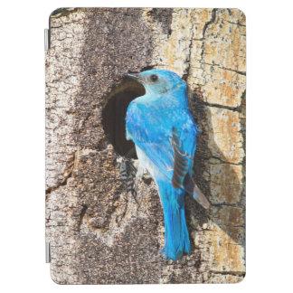 USA, Wyoming, Male Mountain Bluebird iPad Air Cover
