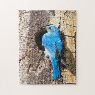 USA, Wyoming, Male Mountain Bluebird Jigsaw Puzzle