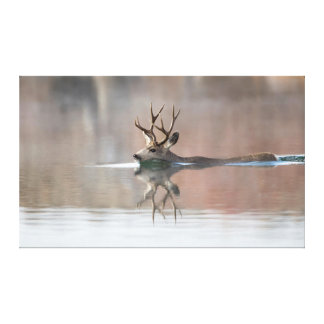 USA, Wyoming, Mule Deer buck swimming lake Canvas Print