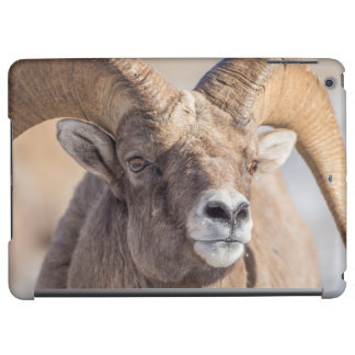 USA, Wyoming, National Elk Refuge, Bighorn Sheep Cover For iPad Air
