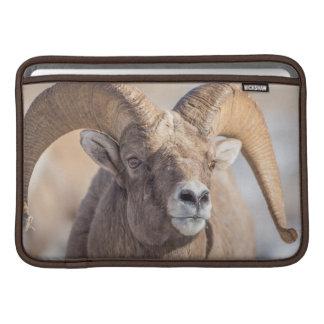 USA, Wyoming, National Elk Refuge, Bighorn Sheep MacBook Sleeve