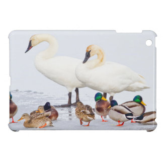 USA, Wyoming, National Elk Refuge, Trumpeter 1 iPad Mini Cases