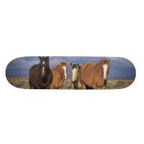 USA, Wyoming, near Cody Group of horses, Heart Skateboard Deck