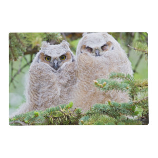 USA, Wyoming, two fledged Great Horned Owl Placemat