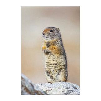 USA, Wyoming, Uintah Ground Squirrel standing Canvas Print
